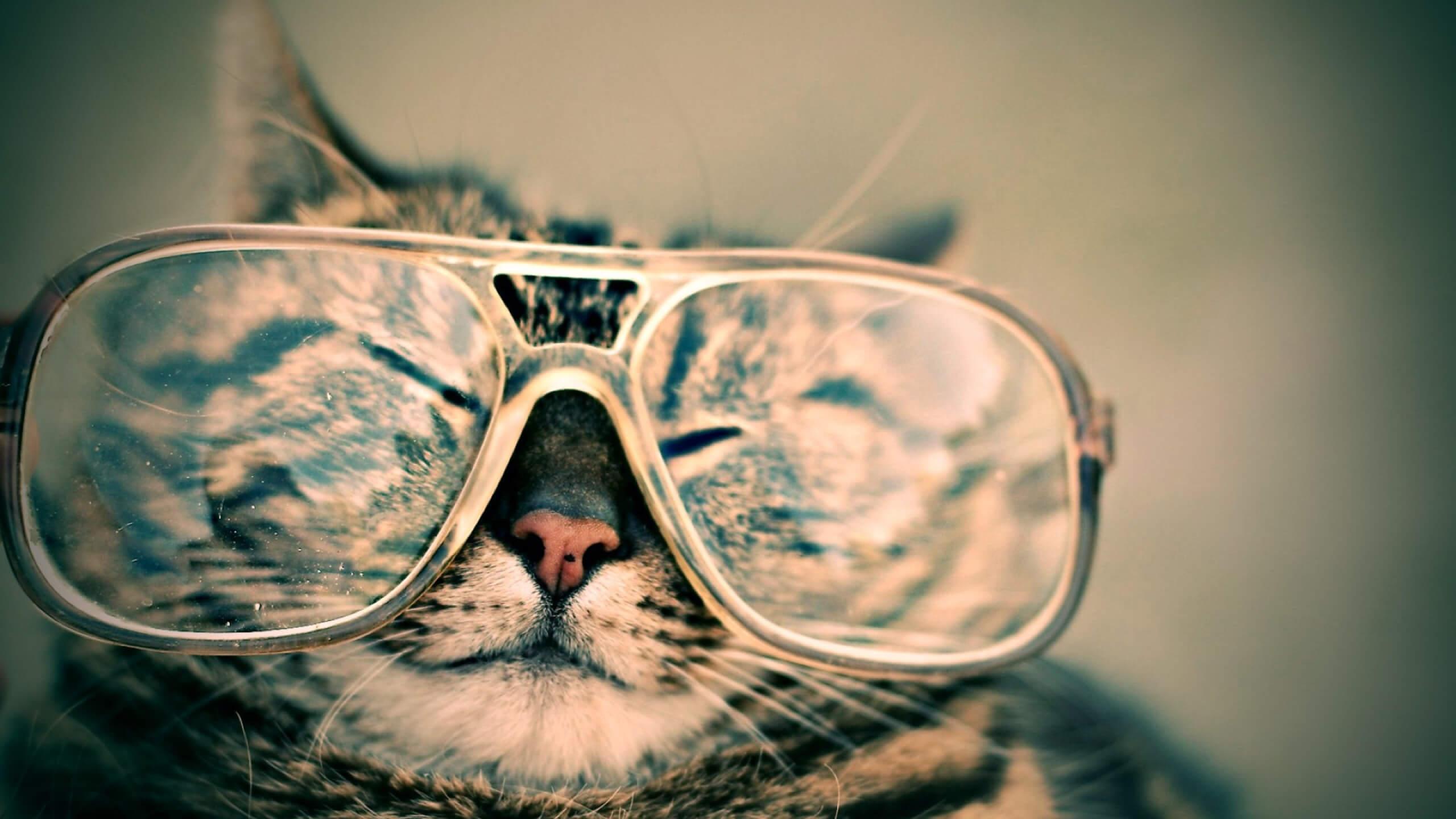 Katze im Bill Gates Look